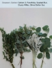 Option 1: Parvifolia, Seeded Euc, Dusty Miller, Silver Dollar Euc.